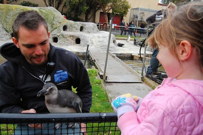 anthony.cub.penguin
