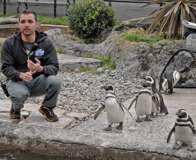 anthony.penguins