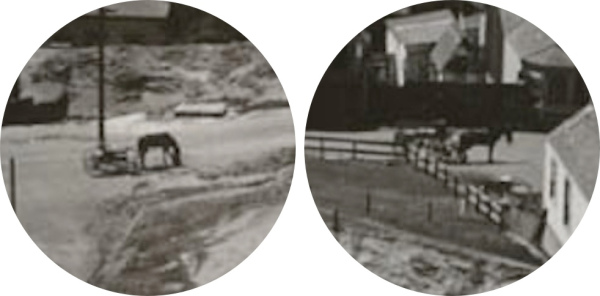 1907-bernal-horses