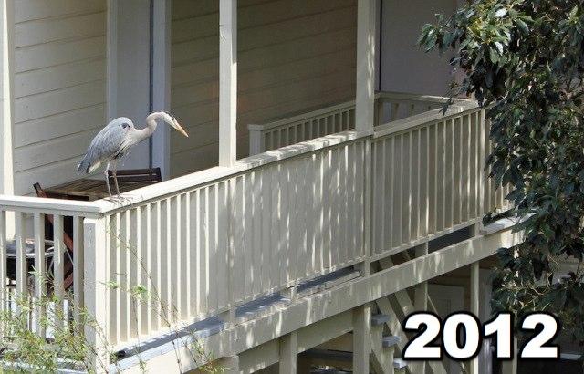 backdeckbird2012