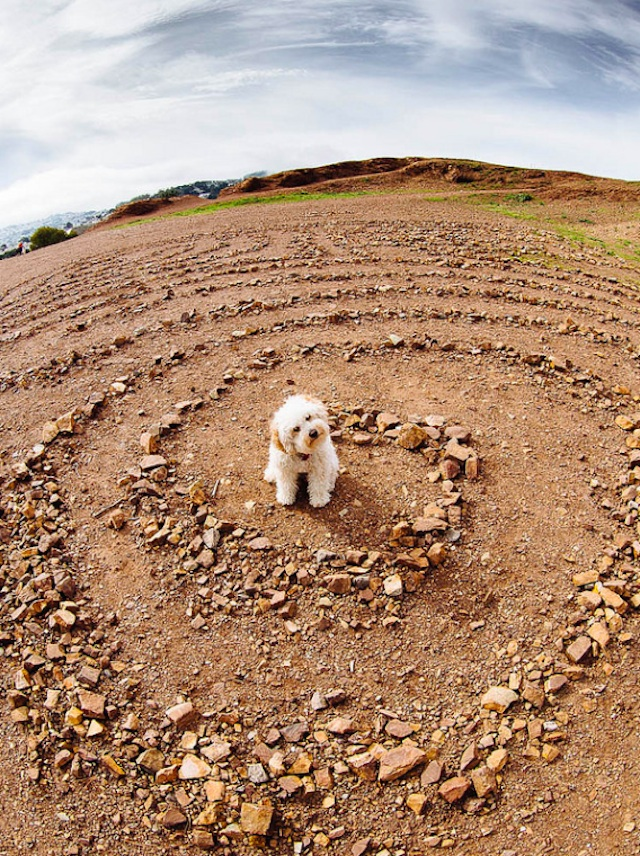 labyrinthdog