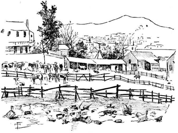 Salomonsstockyard