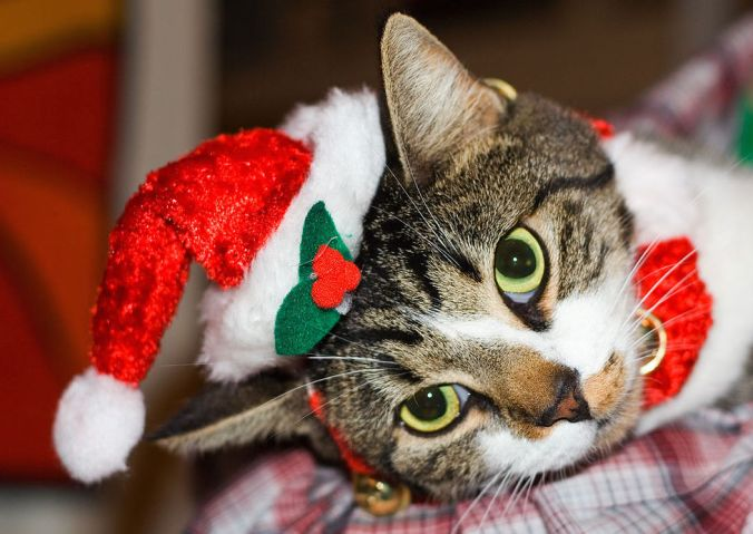 1280px-Christmas_cat