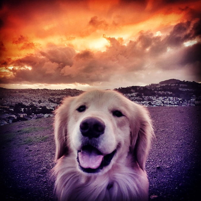 doggiesunset
