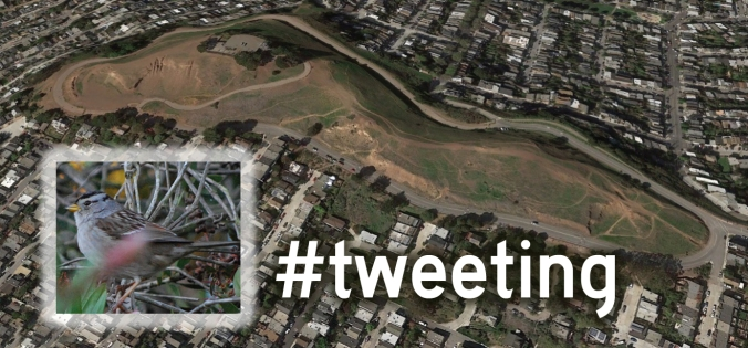 BernalHilltweeting