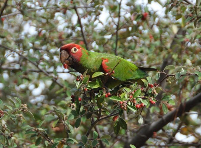 parrot01