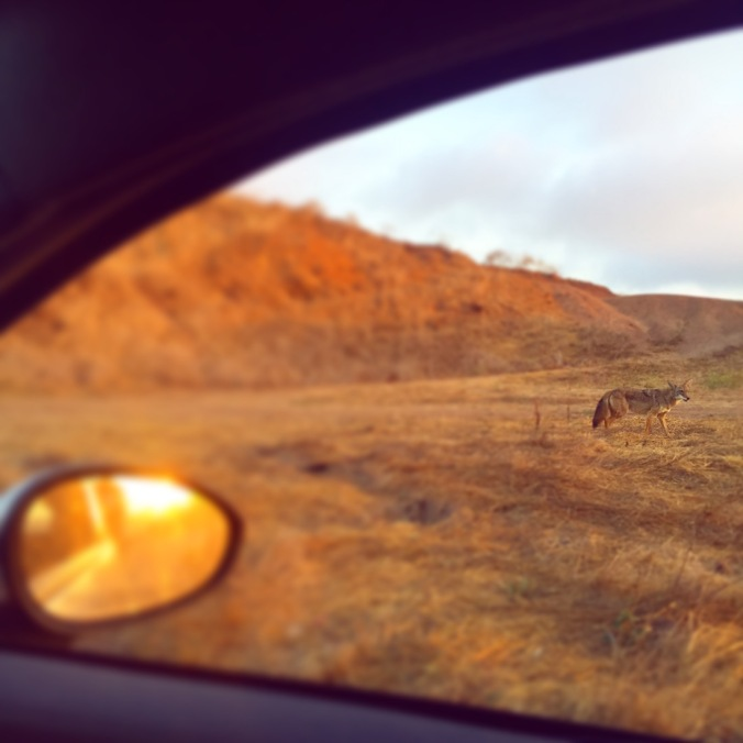 coyotecar