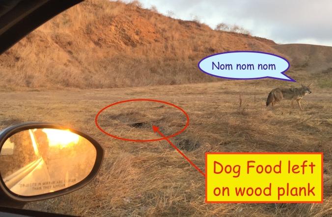 coyotefoodsite