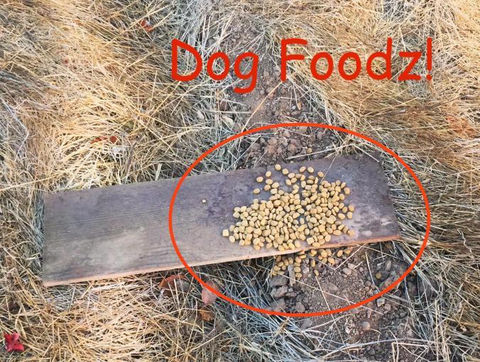 dogfoodz